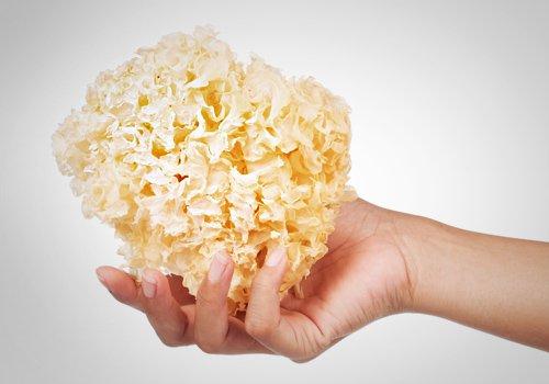 Mushroom benefits for skin - Tremella