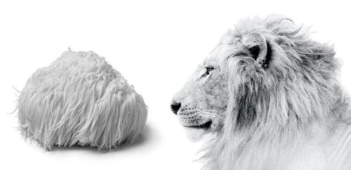How Lion's Mane got its name