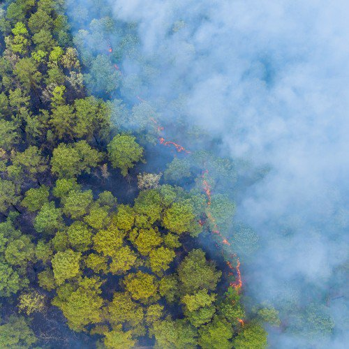 Decontaminating water from wildfire ash toxins