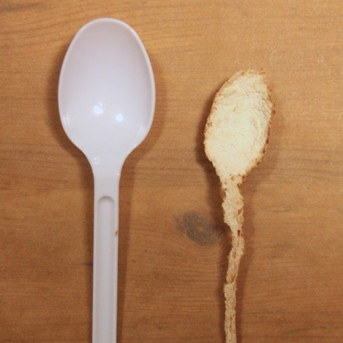 White rot mushrooms can eat plastic